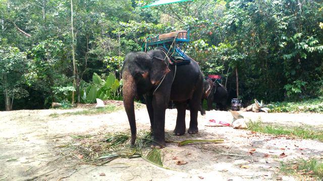 Elefanten am Namuang Waterfall, Koh Samui