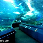 Pattaya Aquarium – Under Water World