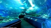 Pattaya Aquarium