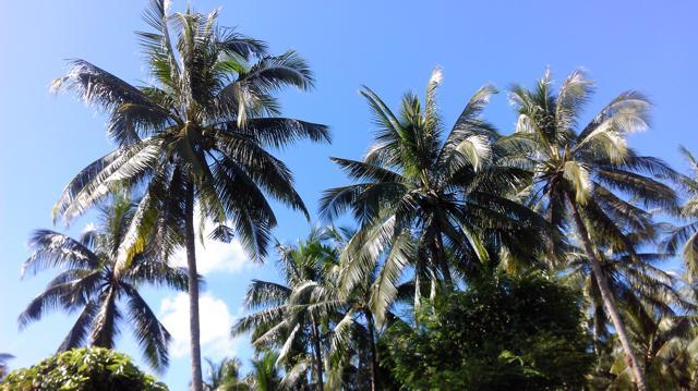 Wetter in Thailand, Palmen und blauer Himmel